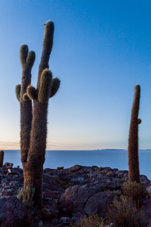 incahuasi: Early morning on Isla Incahuasi (Isla del Pescado) in the middle of the worlds biggest salt plain Salar de Uyuni, Bolivia. Island is covered in Trichoreus cactus. Stock Photo