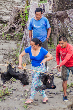 villager: LORETO, PERU - JULY 14, 2015: Villager transports a bunch of hens in peruvian jungle