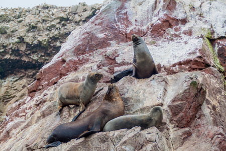 islas: South American Sea lions relaxing on the rocks of the Ballestas Islands in the Paracas National park, Peru. Stock Photo