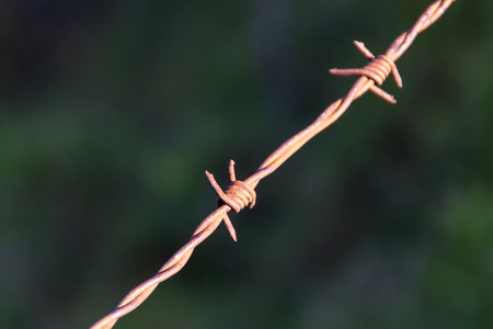 Detail of barbed wire