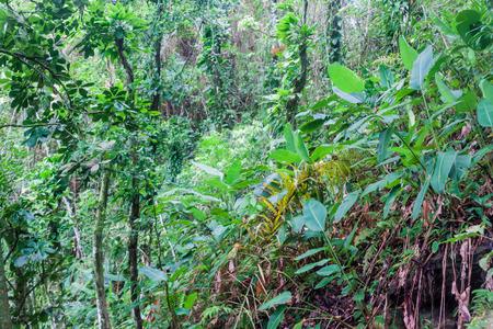 Jungle near Trindade village near Paraty, Rio de Janeiro state, Brazil.