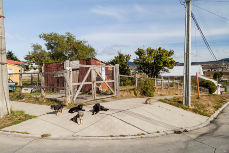 arenas: Street dogs in Punta Arenas, Chile
