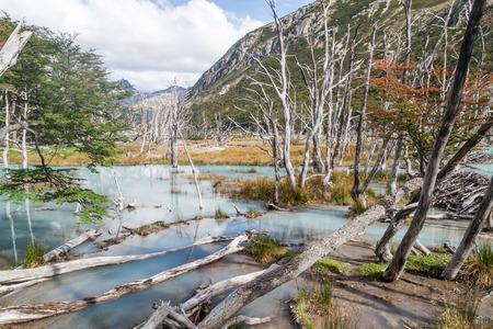tierra: Beaver dam and lake in Tierra del Fuego, Argentina