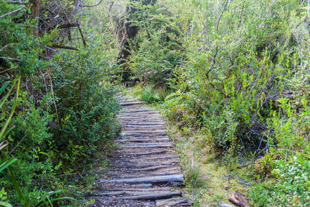 wilds: Boardwalk in a forest in National Park Chiloe, Chile Stock Photo