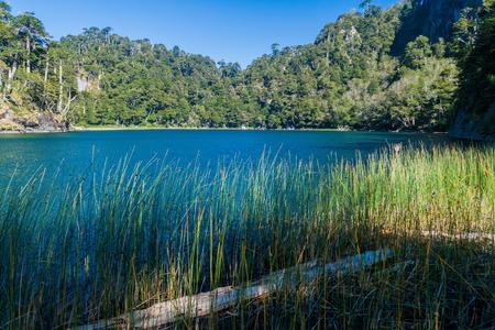 lago: Lago Verde lake in National Park Huerquehue, Chile