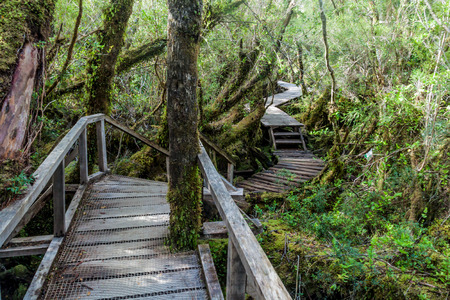 wilds: Boardwalk on a trekking trail in a forest in National Park Chiloe, Chile