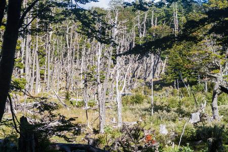 tierra: Forest in National Park Tierra del Fuego, Argentina