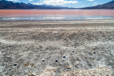 borax: Flamingo eggs on a coast of Laguna Colorada lake on bolivian Altiplano