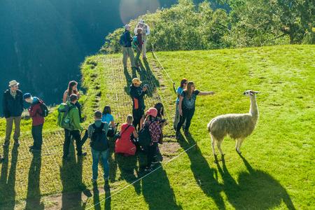 MACHU PICCHU, PERU - MAY 18, 2015: Tourists watch lamas at Machu Picchu ruins, Peru. Editorial