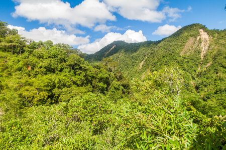 basin mountain: Jungle covering mountains near Rurrenabaque, Bolivia