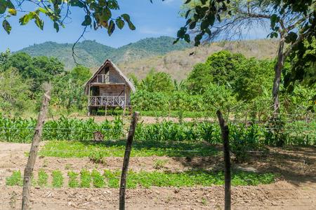 vegatation: Traditional house in Agua Blanca village in Machalilla National Park, Ecuador