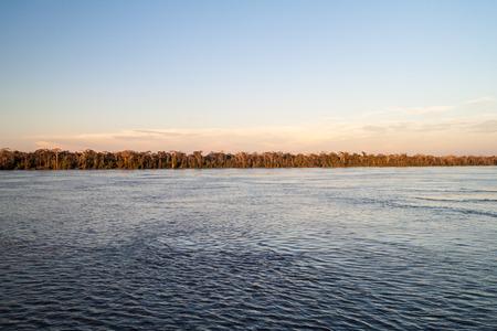 río amazonas: Selva a lo largo del r�o Amazonas en Brasil