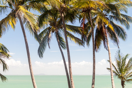 political prisoner: Palms along the coast of Ile Royale, one of the islands of Iles du Salut (Islands of Salvation) in French Guiana
