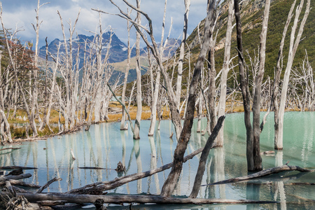 fuego: Beaver dam and lakes in Tierra del Fuego, Argentina