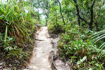 Jungle trail near Trindade village near Paraty, Rio de Janeiro state, Brazil.