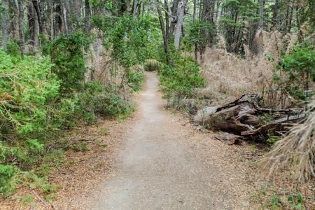 Trekking trail in Municipal Park Llao Llao near Bariloche, Argentina