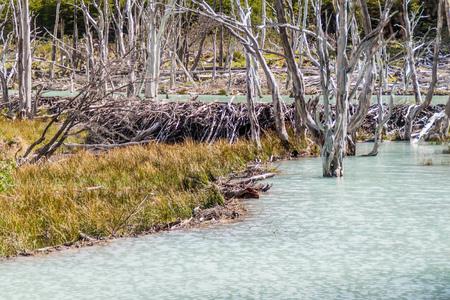 tierra: Beaver dam and lakes in Tierra del Fuego, Argentina