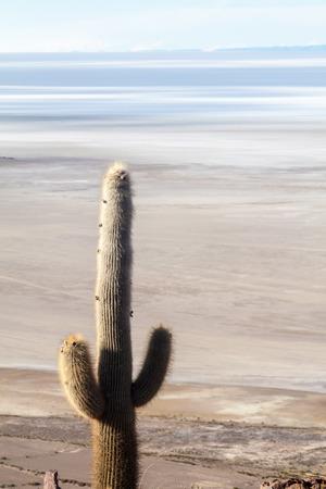 salt flat: Largest salt flat in the world - Salar de Uyuni, Bolivia