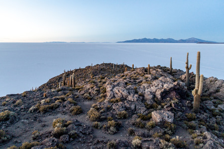pescado: Early morning on Isla Incahuasi (Isla del Pescado) in the middle of the worlds biggest salt plain Salar de Uyuni, Bolivia. Island is covered in Trichoreus cactus. Stock Photo