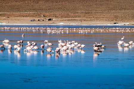 Laguna Collpa lake in Reserva Nacional de Fauna Andina Eduardo Avaroa protected area is full of flamingos, Bolivia Stock Photo