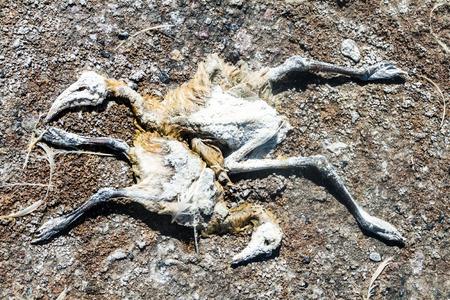 borax: Dead flamingos on a coast of Laguna Colorada lake on bolivian Altiplano Stock Photo
