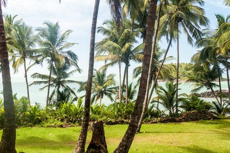 salut: Palms along the coast of Ile Royale, one of the islands of Iles du Salut (Islands of Salvation) in French Guiana