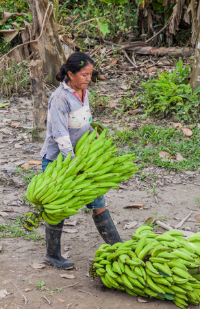 southamerica: NAPO, PERU - JULY 14, 2015: Local woman carries bunchs of plantains in peruvian jungle
