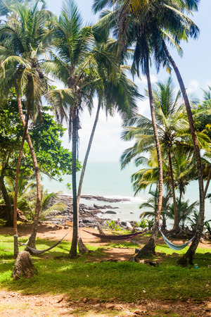 political prisoner: Palms with hammocks along the coast of Ile Royale, one of the islands of Iles du Salut (Islands of Salvation) in French Guiana