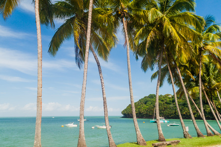 Palms along the coast of Ile Royale, one of the islands of Iles du Salut (Islands of Salvation) in French Guiana