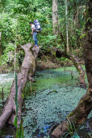 guia turistico: MADIDI, BOLIVIA - 8 de mayo, 2105: guía nativo en una selva del Parque Nacional Madidi, Bolivia Editorial