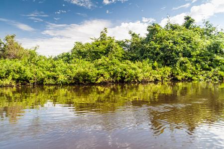 Trees lining river Yacuma in Bolivia Stock Photo