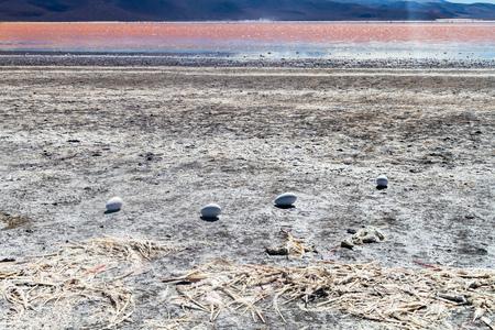 borax: Dead flamingos and flamingo eggs on a coast of Laguna Colorada lake on bolivian Altiplano Stock Photo