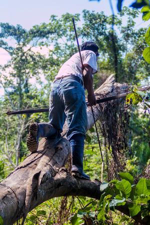guia de turismo: MADIDI, BOLIVIA - 8 de mayo, 2105: Nativo de caza de guía turístico en una selva del Parque Nacional Madidi, Bolivia