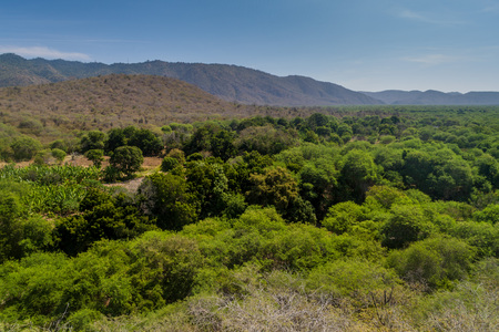 vegatation: Dry forest in Machalilla National Park, Ecuador Stock Photo