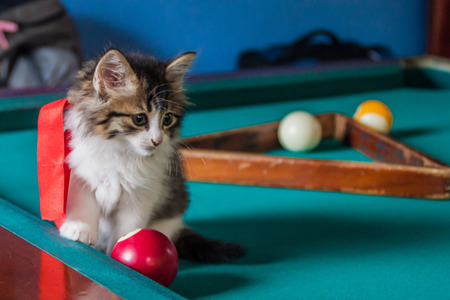 Chaton sur la table de billard Banque d'images