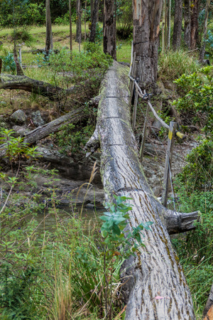 Log bridge in Toachi river canyon near Quilotoa crater, Ecuador Stock Photo