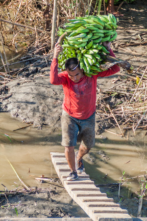 boat crew: NAPO, PERU - JULY 15, 2015: Cargo boat crew transports bunches of plantains to the boat deck. Cargo boat Arabela I plies river Napo.