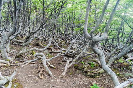 tierra del fuego: Forest near Ushuaia, Tierra del Fuego island, Argentina