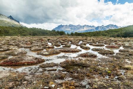 tierra del fuego: Peat bog in Tierra del Fuego, Argentina Stock Photo