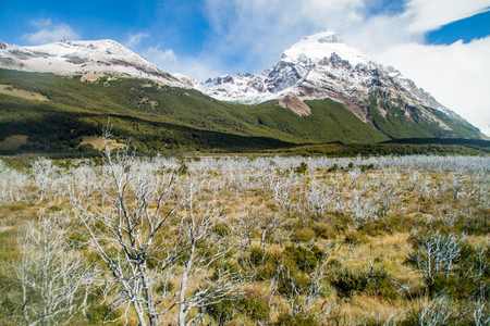 Dead forest in valley of Rio Fitz Roy river in National Park Los Glaciares, Patagonia, Argentina