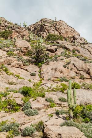 rock formation: Rocks and cacti in Quebrada del Colorado near Cafayate, Argentina