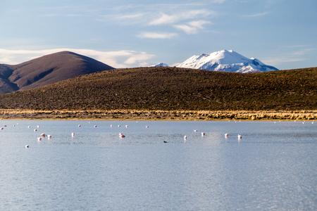 bolivian: Lake full of flamingos on bolivian Altiplano Stock Photo