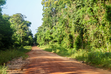 Road across the jungle in Guyana