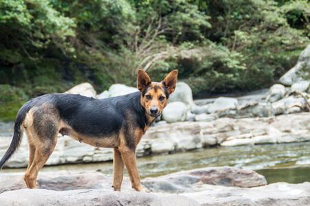 Dog stays at El Estrecho, narrows of river Magdalena in Colombia