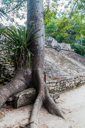 yucatan: Ball court overgrown by the ceiba tree at the ruins of the Mayan city Coba, Mexico Stock Photo