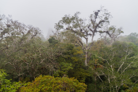 Jungle of the National ParkTikal during the misty morning, Guatemala