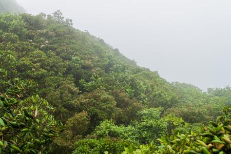 Cloud forest of Reserva Biologica Bosque Nuboso Monteverde, Costa Rica Imagens