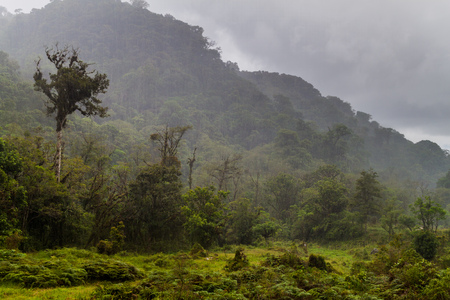 Jungle near Boquete during heavy rain, Panama