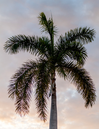Palm during the sunset Stock Photo