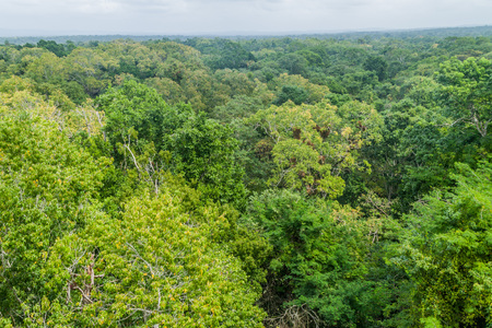 Jungle near the archaeological site Yaxha, Guatemala